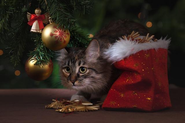 кот в новый год