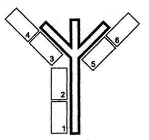 схема древо жизни